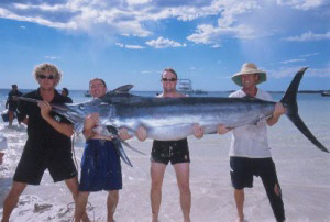 Marlin fishing - successful yet again